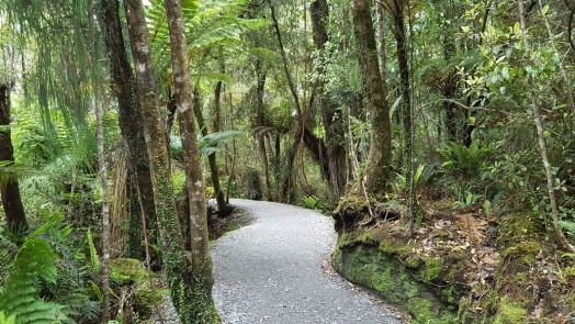 Trail to Lake Matheson