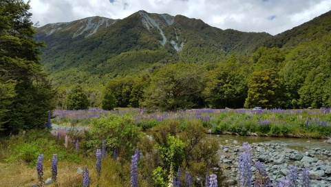 Scene along the road to Milford Sound