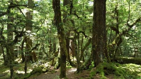 Hike Scene 1