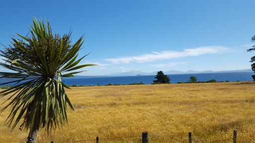 View of Lake Taupo with Mt. Ruapehu in the distance.  Near Turangi.