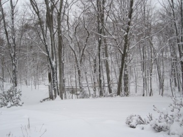 Looking down the driveway (to the left) at my former home in Bucks County, Pennsylvania